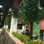 green-plant-wall